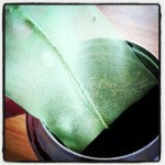 マイボトルと煎茶のティーバッグで簡単!冷たい緑茶の作り方