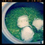 緑茶でリラックス&安眠!?氷水出し茶の簡単な淹れ方