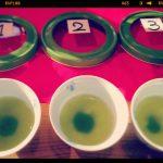 まちゼミで緑茶の産地別飲み比べ♪講師も楽しみました!